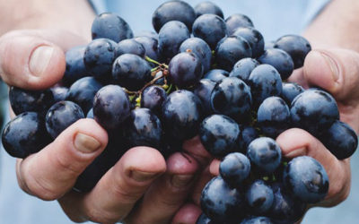 Soil Health Vineyard Management Survey