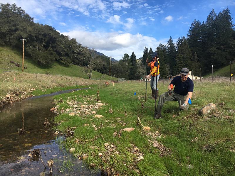 Bidwell Creek restoration day with RCD staff.