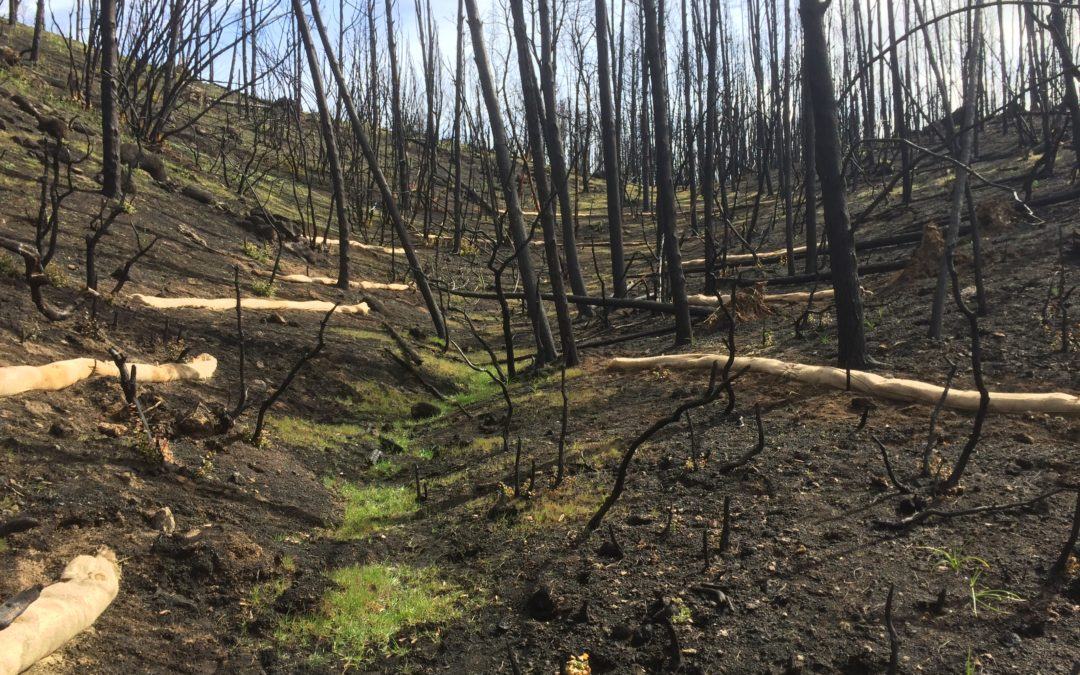 Fire Recovery Efforts to Date