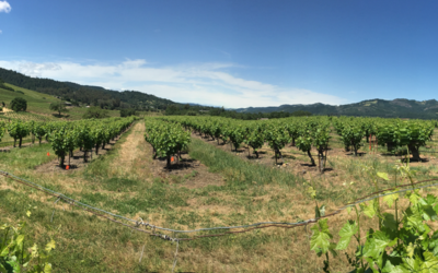 Vineyard Soil Health Trial Summary
