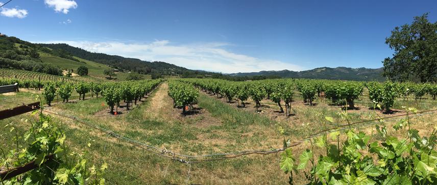 Vineyard Soil Health Trial Summary